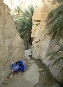 tunez(tarjeta 2) 116